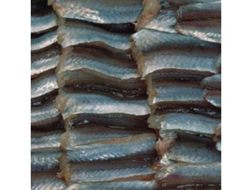 Filetes de bacaladilla. Caja 2 Kgs.