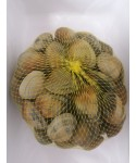 Almeja fina Extra superior de 33 a 35 piezas kg.