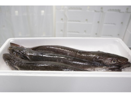 Merluza 2kg eviscerada sin escamas